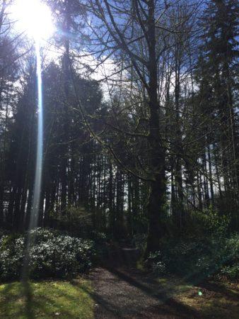 forest scene representing mercury retrograde